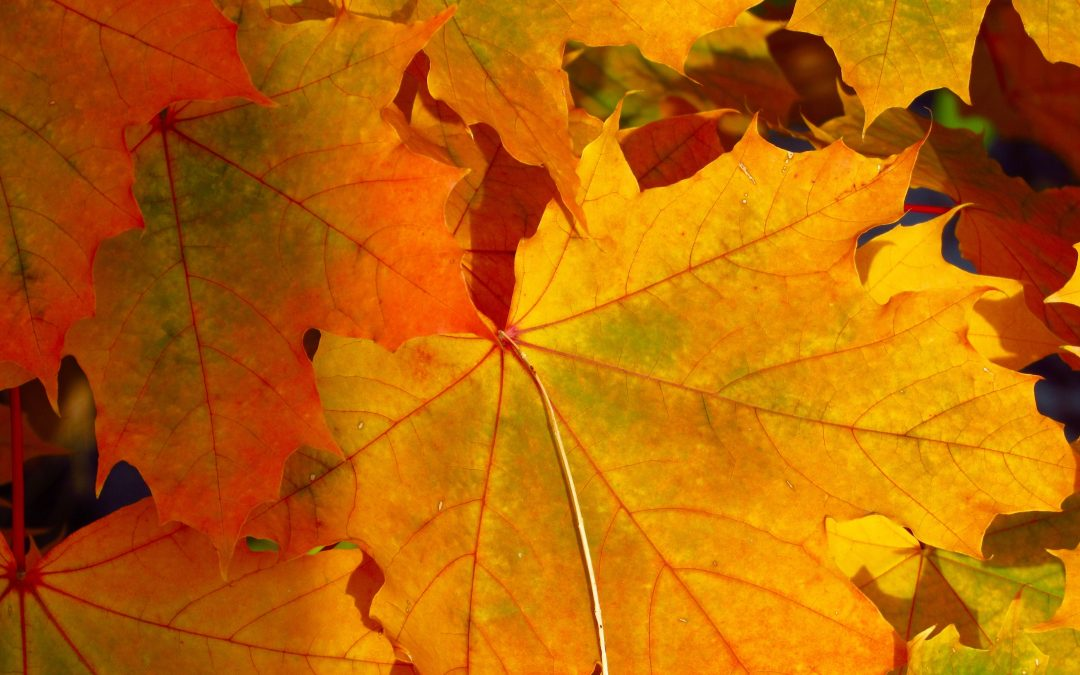 Autumn and Chinese Medicine: Wisdom for Immunity, Vitality and Emotional Wellness